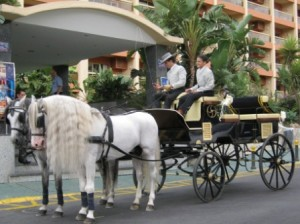 Horse & Carriage for Wedding at Sunset Beach Club