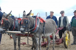 National & European Ploughing Championship