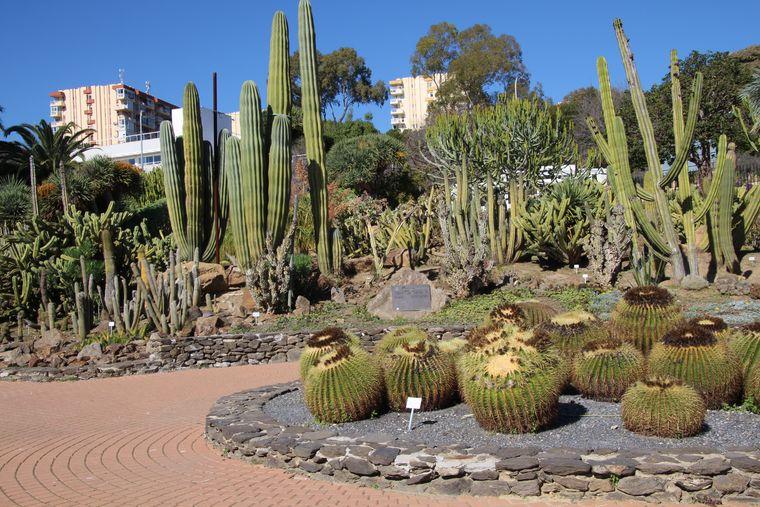 Cactus garden at Paloma Park