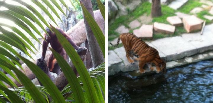 Bioparc Zoo in Fuengirola