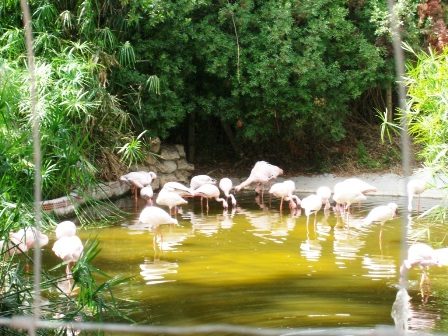 Flamingos at Selwo Aventura