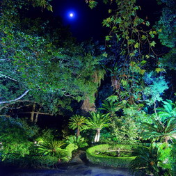 The Botanical Gardens at night...