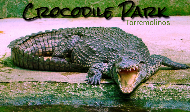 Crocodile Park in Torremolinos