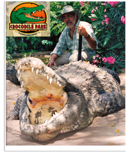Meet 'Paco' the 600 kg monster croc!