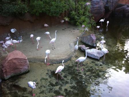 Falmingos in Bioparc Fuengirola