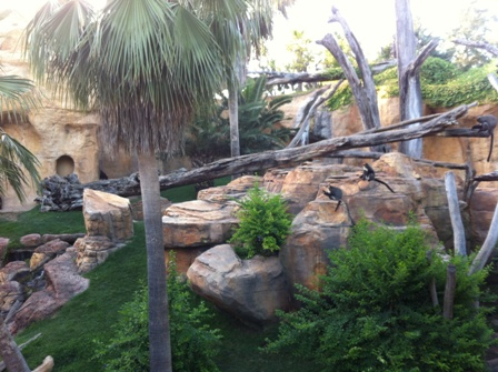 Home of the Gorillas at Bioparc Fuengirola