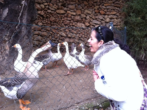 Geese at Zoo de Castellar