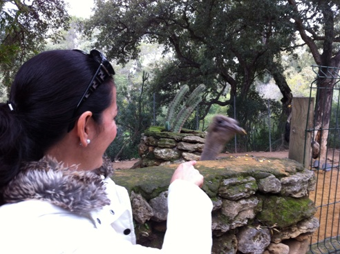 Feeding an Ostrich at Zoo de Castellar