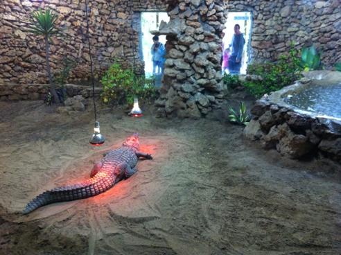 Nile Crocodile at Zoo de Castellar