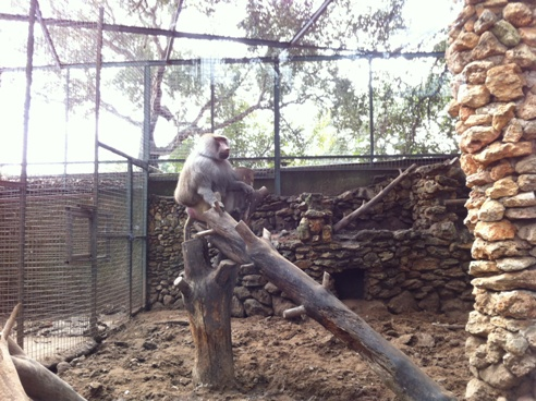 Baboon at Zoo de Castellar