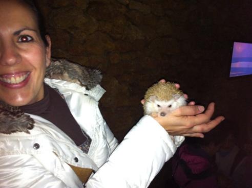 Albino hedgehog at Zoo de Castellar