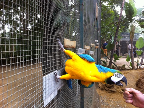 Feeding the parrots at Zoo de Castellar