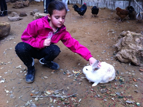 Feeding rabbits at Zoo de Castellar