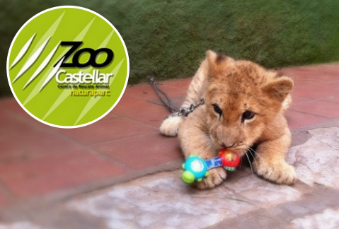 Lion Cub at Zoo de Castellar