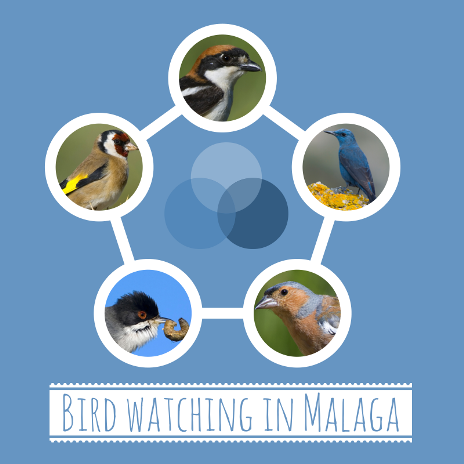 Bird watching in Malaga