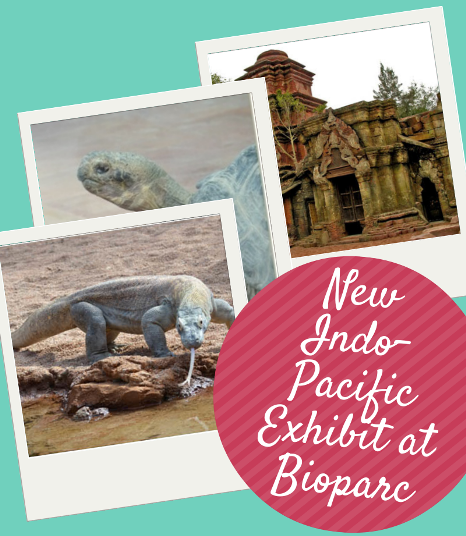 New Indo-Pacific Exhibit at Bioparc Fuengirola