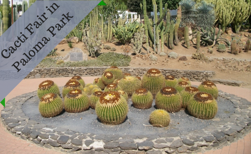 Cacti Fair in Paloma Park