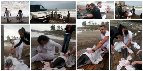 Luna Beach Team try to save Dolphin
