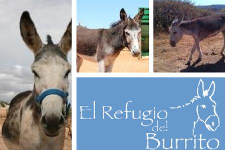 Donkey Sanctuary in Fuente de Piedra, Malaga