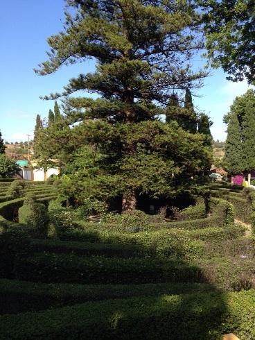 Maze and Pine tree at Molino de Inca Botanical Gardens in Torremolinos
