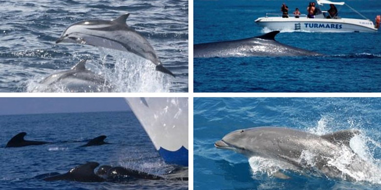 Dolphin and Whale Watching tours